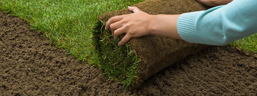 Kobercová tráva vs siata tráva