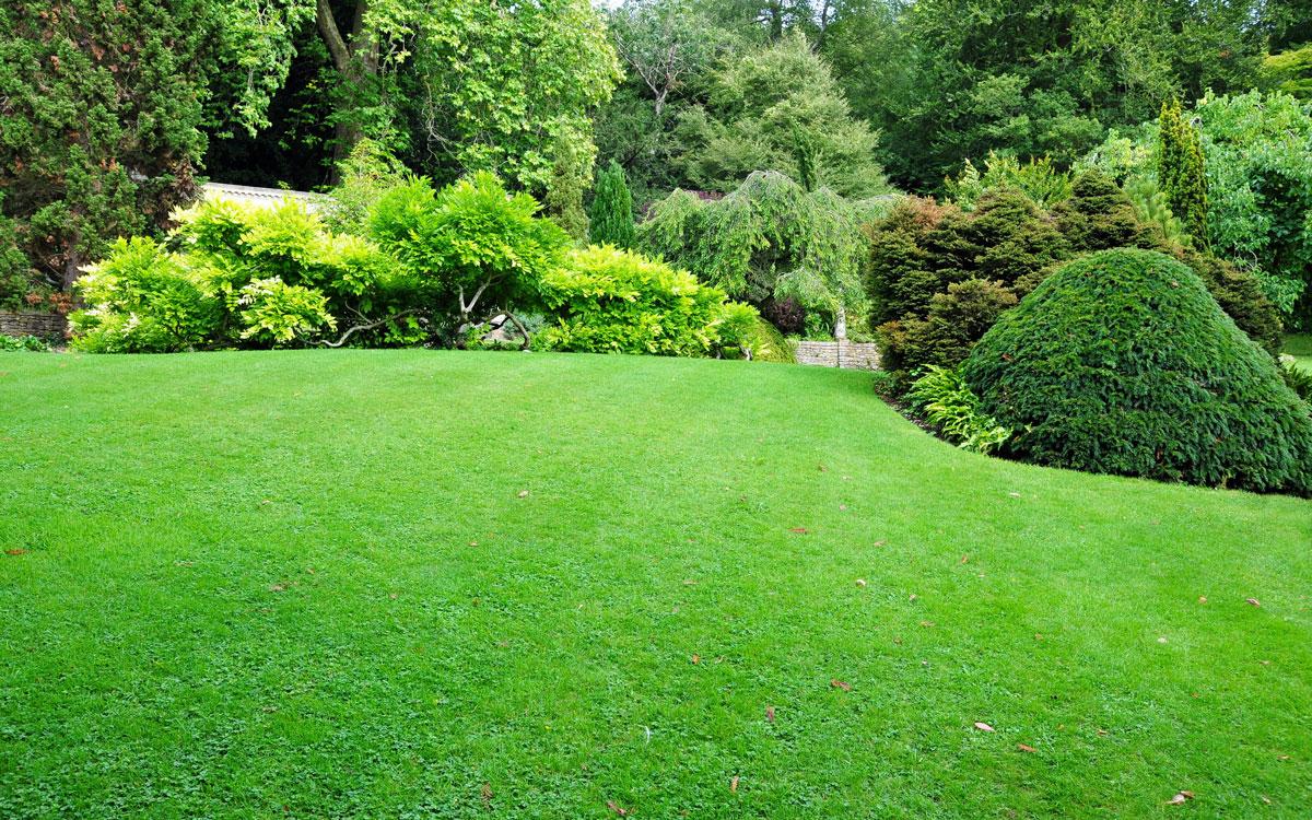 Perfektný trávnik jednoducho