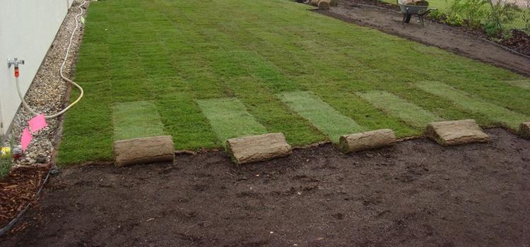 Aký trávnik si vybrať do záhrady?